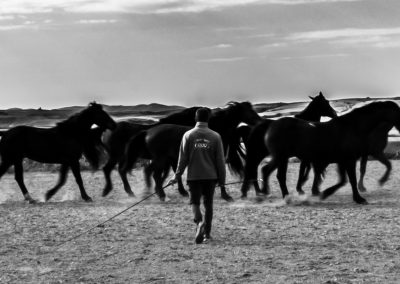 Communication with horses goes through the mind